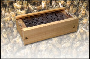 Bees-in-a-Box